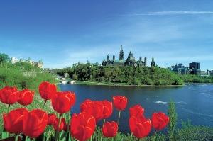 Parliament - Tulip Festival 1